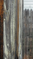 A Post and a Fence (joeldinda) Tags: 2017 michigan pocketcam sonycybershot cybershot 3678 june weatheredwood lansing fence sonydsch55 sony dsch55 176365