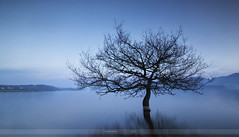 (ManuMatas) Tags: arbol agua nanclares alava basquecountry manumatas landscape paisaje azul blue