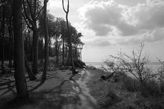 ghost forest - Baltic Sea (elisachris) Tags: balticsea ostsee gespensterwald ghostforest natur nature landschaft landscape wood forest tree bäume wald schwarzweis blackandwhite ricohgr