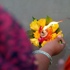 Floral Floats..... Rishikesh (pallab seth) Tags: puja offerings ritual culture woman holywater candid colour pilgrimage devotee holydip rishikesh dehradun uttarakhand india river ganga ganges sage priest hinduism religion religious spiritual temple heritage indian women pilgrim