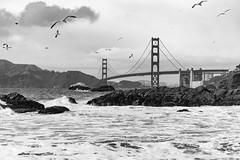 Golden Gate Brigde (frank.gronau) Tags: strand beach wassrw meer ozean bridge gate golden weis schwanz white black francisco san 7 alpha sony gronau frank