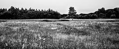(Nico_1962) Tags: panorama leica leicam leicamp240 overijssel zwolle nederland veld field trees bomen tree boom thenetherlands summarit manualfocus handmatigscherpstellen rangefinder meetzoeker