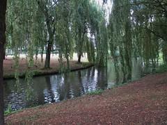 Tilburg: Maarheezepark (♥ Corry ♥) Tags: water trees lake weepingwillow willow nature landscape vijver pond bomen treurwilg wilg natuur landschap tilburg netherlands nederland holland canon green summer zomer groen geese animals ganzen dieren