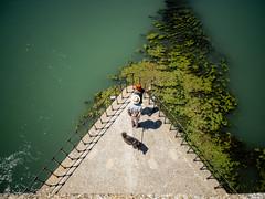 2017 - Avignone - Saint-Benezet (alesalina) Tags: 2017 avignon avignone bridge france pont ponte provenza tourist turista francia provence water fiume river