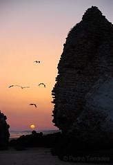 Torre del loro (pericoterrades) Tags: mazagón playa atardecer huelva gaviota aves cielos mar