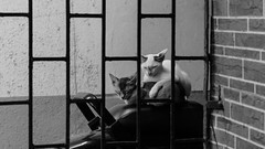 Power Nap (richard_fernando) Tags: cat bw black white kittens bike home wall sleep powernap animal city