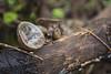 _DSC6097 m (IM.estudio) Tags: mascota pueblo magico sierra madre occidental bosque naturaleza hongo musroom forest jalisco