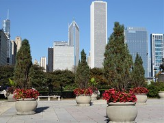 Chicago, Congress Plaza, Skyline Looking North (Mary Warren (8.7+ Million Views)) Tags: chicago building urban congressplaza cityscape skyline architecture skyscrapers planters nature flora plants blooms blossoms flowers red begonias bench prudentialbuilding aontower