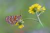 Ti stavo aspettando.... (Raffaella Coreggioli ( fioregiallo)) Tags: natura nikon naturalistica macro fioregiallo2009 fioregiallo fotografia farfalle flora fiore fioregiallophoto insetti