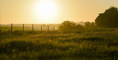 Revival (Edita Ruzgas. Thanks for your visit.) Tags: morning sunrise edita ruzgas landscape outside outdoors summer spring grass trees bushes fence pasture rural vilage countryside sweden south southern sverige nordic country scandinavia skåne skane