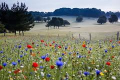 Wild flowers (judethedude73) Tags: nature scene photo landscape golf wild summer