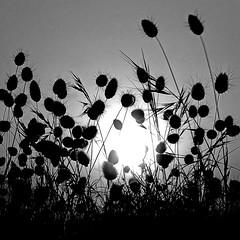 Saint-Hilaire-de-Riez, Vendée (pom.angers) Tags: panasonicdmctz30 july 2017 sainthilairederiez lessablesdolonne vendée 85 paysdelaloire france europeanunion sunset coastline côtedelumière sun 100 150 200 paysdesaintgillescroixdevie 300