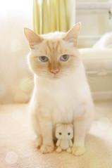 Mello n His Mini-Me (little ♡ lovelies) Tags: mello flame red point siamese cat kitty cute blue eyes handmade felted mini plush