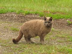 You see me? (Tanumine Photos) Tags: cat kløfta