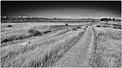 Qu'Il est long le chemin...! It's a long way... (Patevy Damant) Tags: aquitaine bw extérieur jour médoc monochrome nb nikon nuages paysage personne champ ciel