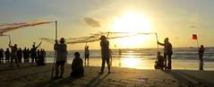 IMG_0281.1 (mikehogan2) Tags: kempsridley sea turtle sunrise padreisland nationalseashore hatchling release