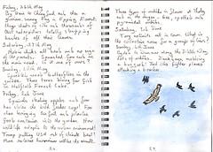 Cubs, chicks, orchids and a buzzard (Hornbeam Arts) Tags: sketchbook
