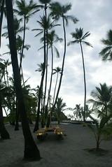 DSC02350 (washuugenius) Tags: photo hawaii bigisland puuhonuaohonaunau nationalpark beach