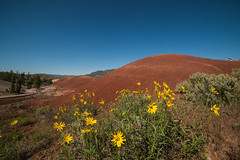 Painted Hills (Justin Knott) Tags: painted hills oregon nikon d800 rokinon 14mm red attractions
