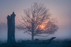 Fallen (Otto Berkeley) Tags: london england uk britain richmond richmondpark tree treetrunk branches bare cold chill chilly fog foggy mist early morning sunrise landscape alone peaceful calm atmospheric