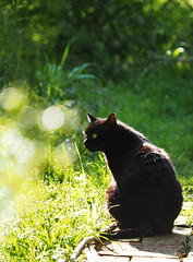 Wiosna Frühling Spring 2017 (arjuna_zbycho) Tags: wiosna frühling spring badenbeiwien blumen kwiaty flowers natur felix blackcat tuxedo tuxedocat kater hauskatze cat animal cute animals pets gato kitten feline kitty kittens pet tier haustier katzen gattini gatto chat cats kocio