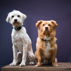 Our doggies from Crete are made ready for summer by Tamara. Their hairdresser. (Angelbattle bros) Tags: portrait dog puppy studio animal cute funny pet little sit friendship fur mammal canine terrier domestic breed adorable mutt strays