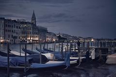 D (Tintenfischkleber) Tags: venedig venice italy dawn sigma30mmf14 water gondolas night