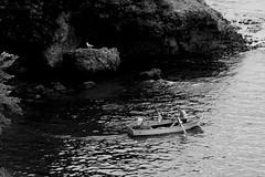 Toward Freedom (halukderinöz) Tags: deniz sea martı seagull balıkçı fisherman şafak dawn ağlar nets freedom özgürlük orhan veli kanık ordu türkiye turkey hd canoneos350d eos350d