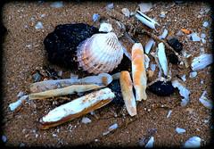 Sand, seashells and seacoal (* RICHARD M (Over 6 million views)) Tags: southportbeach beaches sand seashells shells seacoal coal southport sefton merseyside coast coastal irishsea seashore shore shoreline seaside nature beachcombing