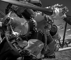 Boeing Stearman Engine - Continental Motor Corp. ©2017 Steven Karp (kartofish) Tags: midatlanticairmuseumwwiishow blackandwhite continentalmotorcorporation boeing biplane engine detail pennsylvania reading readingairport airplane fuji fujifilm xt2 radial radialengine midatlanticwwiishow wwii