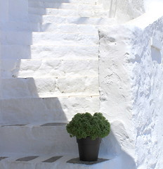 simple beauty (maria xenou ( on/OFF )) Tags: greece hellas basilikum white sunlight sonnenlicht mediterranean mittelmeer light licht canoneos1100d photodromos fotodromos maria simple moments momente shadows stairs stufen ελλαδα στιγμεσ μεσογειοσ σκαλεσ βασιλικοσ απλοτητα σκιεσ φωσηλιου simplicity einfachheit griechenland