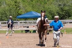 JBC_8434.jpg (Jim Babbage) Tags: krahc annualshow appaloosa horses hughie