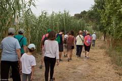 08072017-_POU7967 (Salva Pou Fotos) Tags: 2017 ajuntament fradera grupsenderista observatorifauna pont aiguamolls barberàdelvallès caminada pou