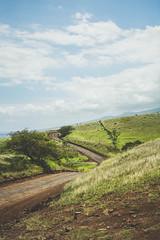 Road to Nowhere (Kou Thao) Tags: animals nature wildlife hawaii scenery photograhy kokohead adventure vintage vibes tropical airplane sky sunset clouds traveler luau horse jungle