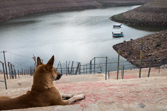 443A1018 (Satish Chelluri) Tags: satishchelluri satishchelluriphotography dog boats water reservoir srisailam andhrapradesh andhra india