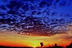 Contrails (timvandenhoek1) Tags: sunrise sky landscape horizon clouds sun sunshine sunlight yellow blue red purple orange contrails jetstream ruralmissouri missouri midwest sigma30mmf14dcdncontemporaryemount sonyilce6000 timvandenhoek