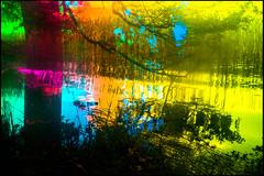 20170605-096 (sulamith.sallmann) Tags: gewässer natur blur bunt colorful effect effekt filter folientechnik lake nature see unscharf wasser waters brandenburg deutschland deu sulamithsallmann