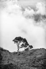 Living on the Edge (Nick Burwell) Tags: hawaii kauai travelhawaii napalicoast napali travel nikon landscape hiking honeymoon monochrome clouds cloudscape tree d800e