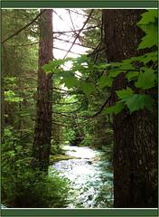 Cheakamus River (FernShade) Tags: cheakamusriver brandywinepark whistler river water nature trees scenery scenic britishcolumbia westcoast