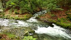 Вливане (saromon1989) Tags: water 水 nature forest green mountain