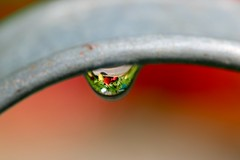 Summertime (AngharadW) Tags: wood grey green red dof macro strawberry droplet angharadw wateringcan water drop