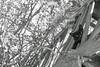 a street animal pic per week for ten years - photo 025/01 (César Brasil) Tags: monochrome noiretblanc blancoynegro pretoebranco blackandwhite streetanimals cat kitty kittycat kitten blackcat streetcat adoption catadoption pet petadoption blackcatadoption petphotographer petphotography gatito gatita callejero gato gata gatonegro gatopreto adoção viralata littledoglaughednoiret