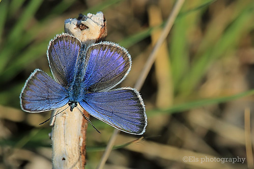 Beautiful blue small butterfly