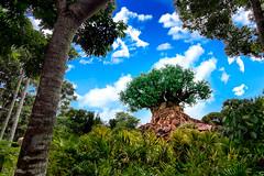 Tree of Life (MarcStampfli) Tags: disneysanimalkingdom waltdisneyworld treeoflife disney disneyworld wdw themeparks florida nikon nikond3200