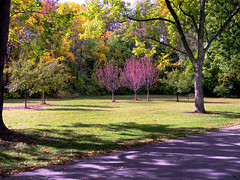 Walk in the Park (David Cornwell) Tags: allencounty fortwayne fosterpark indiana kodakdx4530zoom citypark park us