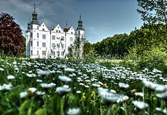 Gänseblümchen Schloß (petra.foto busy busy busy) Tags: schlos ahrensburg schleswigholstein germany gebäude blumenwiese wiese nature architektur gänseblümchen fotopetra canon perspektive