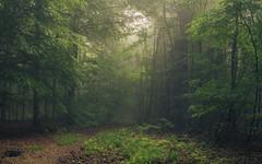 Living Room (Netsrak) Tags: baum bäume eu europa europe landschaft natur nebel wald fog landscape mist nature tree trees woods forest rheinbach nordrheinwestfalen deutschland de
