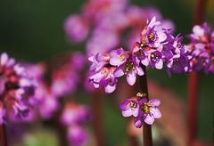 (Barbara.K) Tags: colors flower nature plant dof differentialfocus canon500d canonrebelt1i canonefs55250mm alienskinexposure