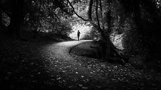 St. Anne's park - Dublin, Ireland - Black and white street photography