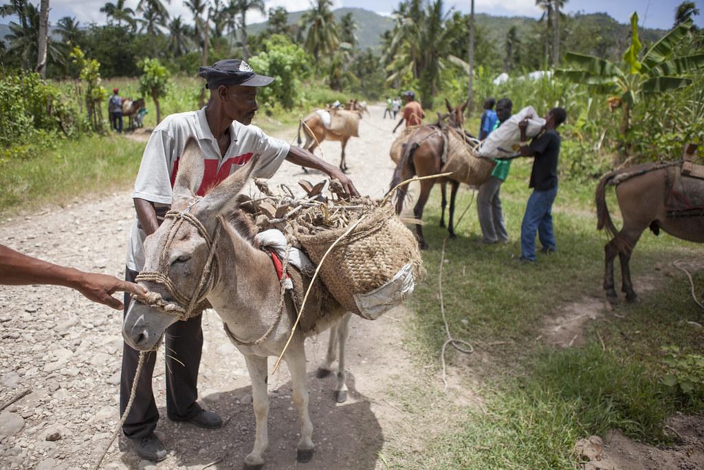 AVSF-HAITI-2017-TRISTANPARRY199